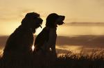 Ostseebad Wustrow Urlaub mit Hund easyquartier.de Vermittlungsagentur